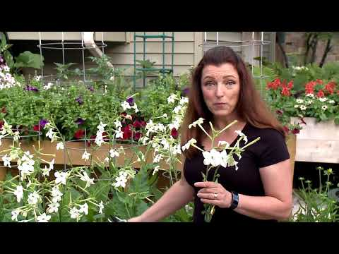 How to Cut a Flower in a Cutting Garden