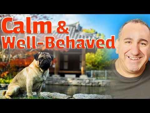 How to get a hyper dog to calm down