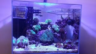 Reef Tank Update # 8 New Clownfish And Corals