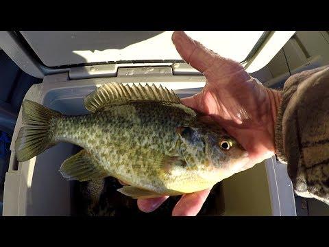 Winter Bluegill and Shellcracker Fishing