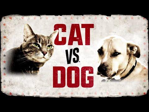 CAT vs. DOG premieres Nov. 11 on Animal Planet