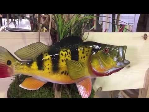 Peacock Bass Fishmount - Gray Taxidermy Fishmounts, Custom fish reproductions
