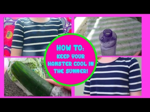 Keeping your hamster cool in the summer!