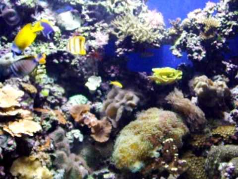 Fish at the Florida Aquarium