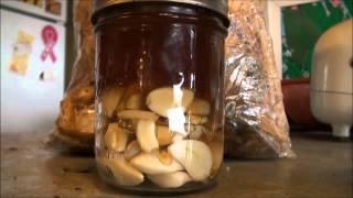 Fermenting Raw Garlic in Raw Honey
