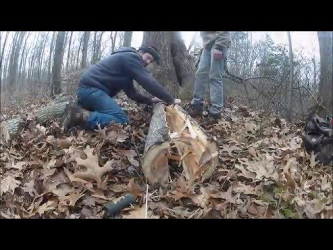 Traditional Bow Building - Part I - Harvesting The Bow Wood- Ancestral Knowledge