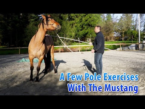 A Few Pole Exercises With The Mustang