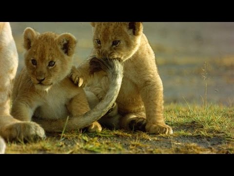 How This Lioness Copes with Being a Single Mom