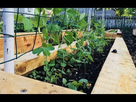 Gardening in Wisconsin - Week 8 of 30 - May 2018