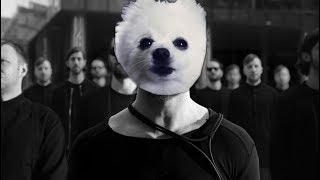 Imagine Doggos  Thunder