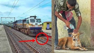 Humanity Exists ! Watch what happened when a dog survives after hitting by a very speedy train