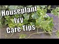 Download  Houseplant Ivy Care MP3,3GP,MP4