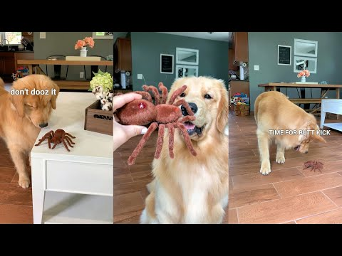 Xxx Mp4 My Dog Reacts To Giant Spider 3gp Sex