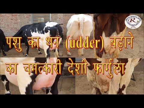 दूध बढ़ाने का चमत्कारी  देशी  फार्मूला  Miraculous native formula for increasing milk