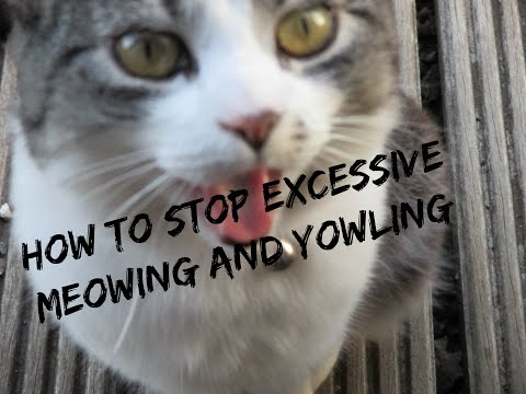How To Stop Your Cat From Meowing and Yowling