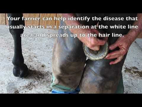 How to Treat & Prevent White Line Disease