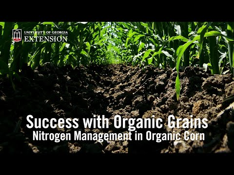 Success with Organic Grains: Nitrogen Management in Organic Corn