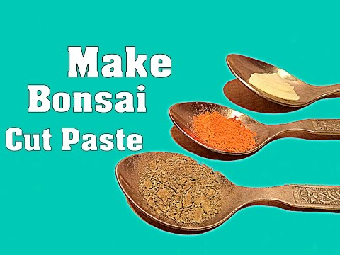 How to Make Bonsai Cut Paste at Home / 3 Simple Way to Make Own Cut Paste / Tips  // Mammal Bonsai