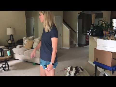 How to manage multiple dogs and chaos in the house - QBK9