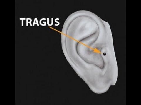 Tragus piercing - Piercings Works Amsterdam