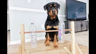 Download Rottweiler vs Home-made Bottle spinner toy |35 Video