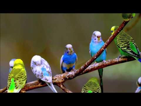 Angry cat ringtone mp3 koyal bird sound free download.