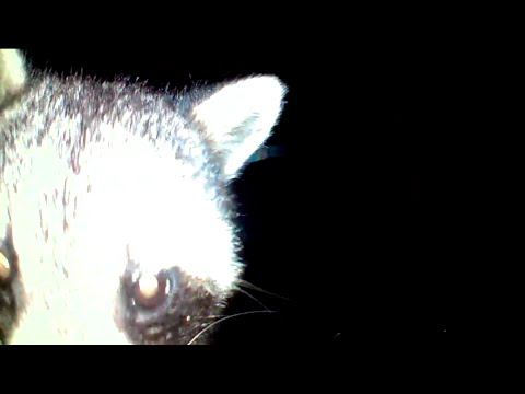 How to make a LIVE wildlife camera trap for  your back yard
