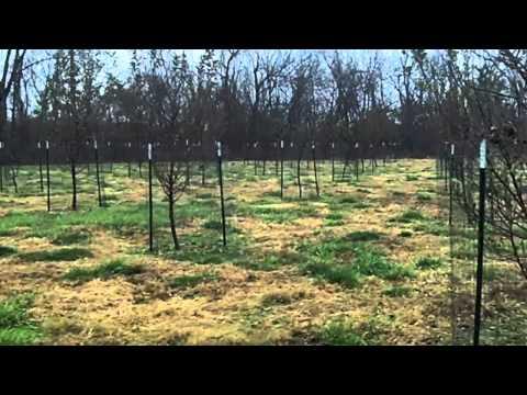 Otter Creek Deer Video