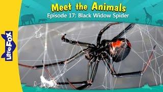 Download Meet the Animals 17 | Black Widow Spider | Wild Animals | Little Fox | Animated Stories for Kids Video