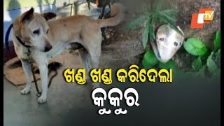 Pet Dog Fights With Snake To Save Owner's Family In Odisha