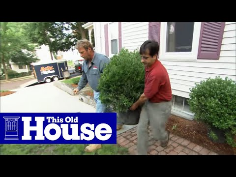 How to Plant a Privacy Screen and Welcome Garden - This Old House