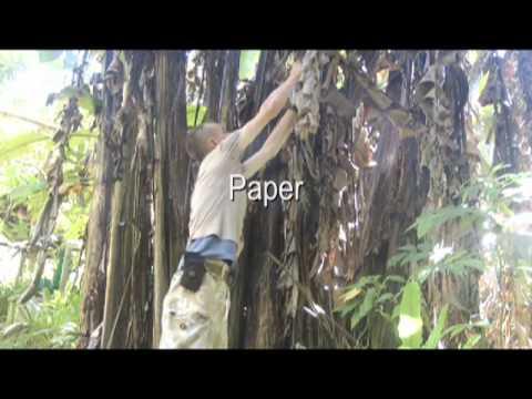 Jungle survival food