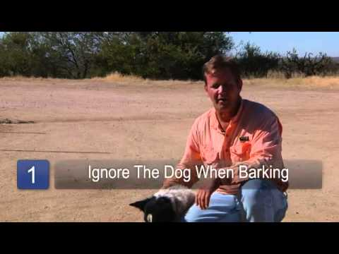 How to Stop a Dog From Barking at the Door
