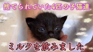 ダンボール箱に入れられ捨てられていた乳飲み子猫達にミルクを与えてみます【We gave bottle-fed kittens】