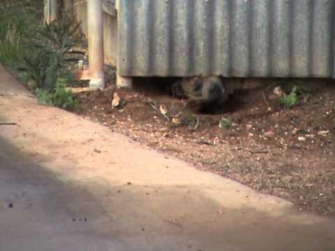 Dog digging under fence 2