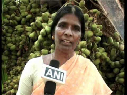 Coconut trees bear record breaking 5000 fruits in India's southern state