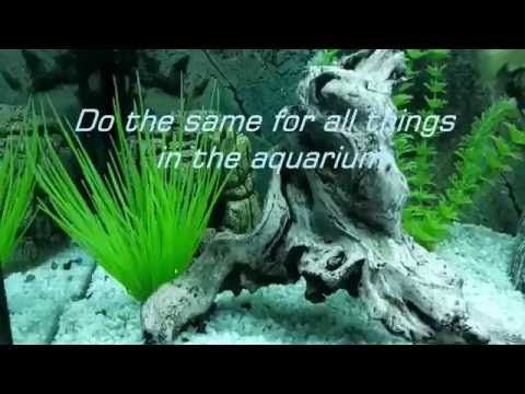 How to remove algae from plastic plants and all things under water
