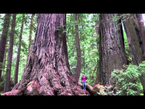 California Camping @ Kamp Klamath in the heart of the Redwoods