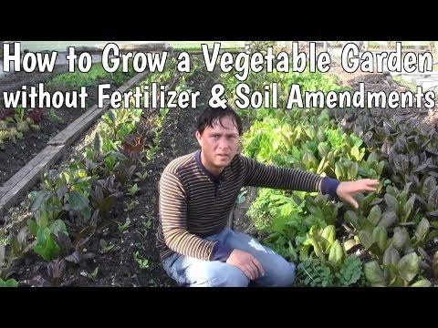 How to Grow a Vegetable Garden without Fertilizer & Soil Amendments
