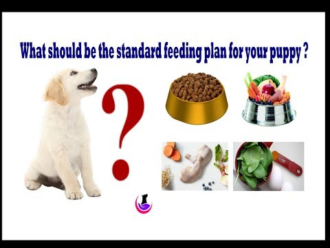 Puppy food plan  ( in Hindi )