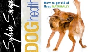 How To Get Rid Of Fleas In The House On Your Dog And In The Carpet Na