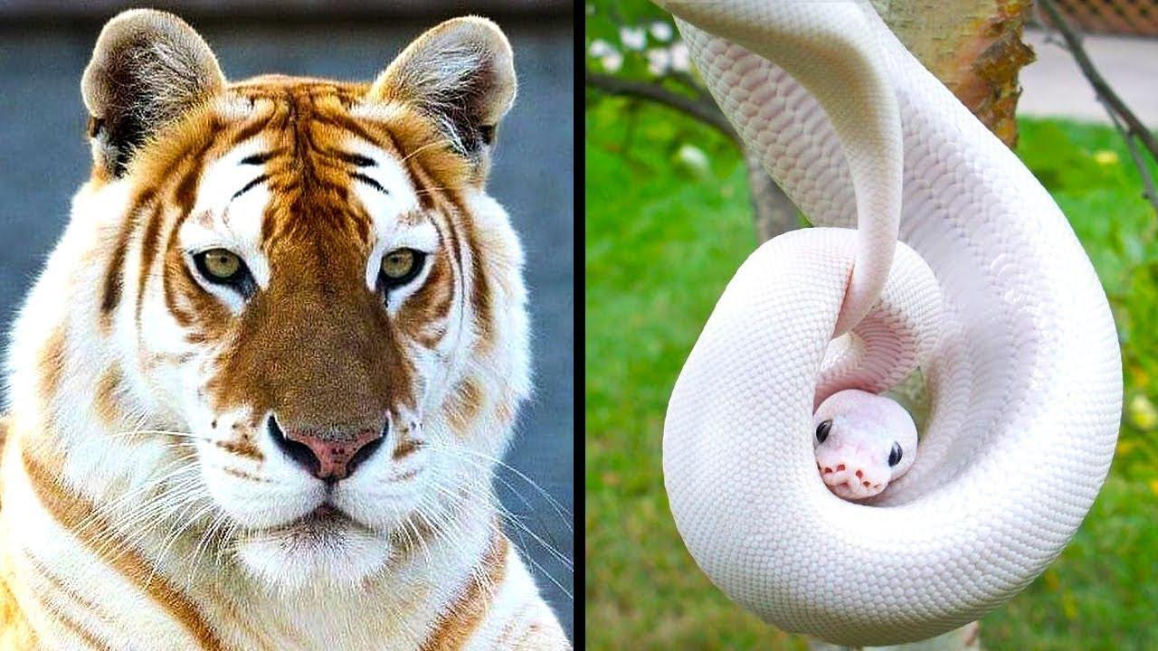 Rarest Animals in the World