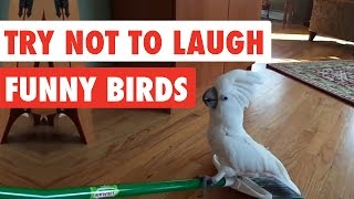 Try Not To Laugh   Funny Birds Video Compilation