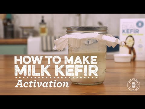 Activating Milk Kefir Grains