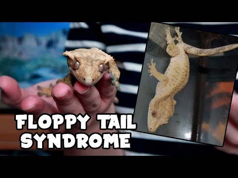 FLOPPY TAIL SYNDROME - What it is & How to avoid it!