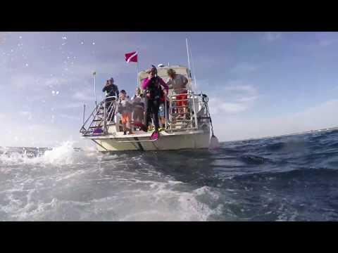 Check Dive 2 - West Palm Beach, FL