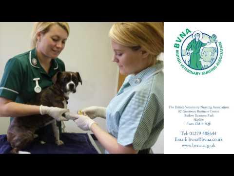A Career in Veterinary Nursing