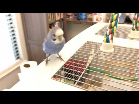 Pixel and Kiwi peep to each other across the house + Kiwi talks to a TV remote