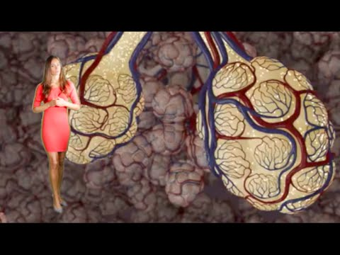 Emphysema & Bronchitis: COPD