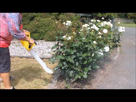 Using a duster and diatomaceous Earth as an organic option for pest control